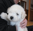 The Most Popular Puppy With A Facebook Page