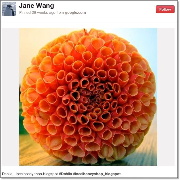 Photography Pinterest Board